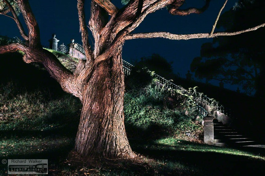 Centennial Park, stairs and tree, light painting photography, long time exposure, Fuji T64, Fujifilm GX680, flashlight, torch light, treescape