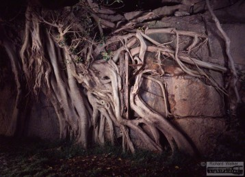 Fig tree roots, timber post, light painting photography, landscapes at dusk, long time exposure, medium format photography, Fuji T64, Fujifilm GX680