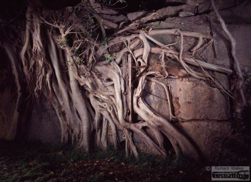 Peacock Point, East Balmain, Illoura Reserve, fig tree roots, timber post, light painting photography, landscapes at dusk, long time exposure, medium format photography, Fuji T64, Fujifilm GX680