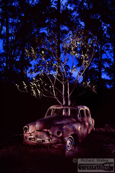 Kempsey NSW, Mid North Coast of New South Wales, Standard Vanguard, tree guard, Nature reclaims, nature vs man, Nature taking over, rusty car, light painting photography, landscapes at dusk, long time exposure, medium format photography, Fuji T64, Fujifilm GX680, tree growing out of car, fig tree, maple tree